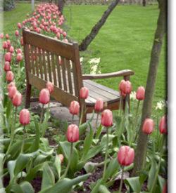 tulipsaroundbench